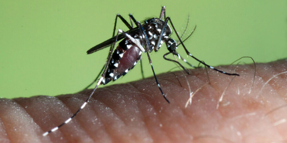 What are the Symptoms of Dengue Fever?